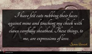 James Herriot quote : I have felt cats ...