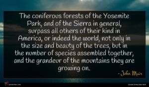 John Muir quote : The coniferous forests of ...