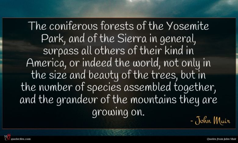 Photo of John Muir quote : The coniferous forests of …