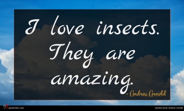I love insects. They are amazing.