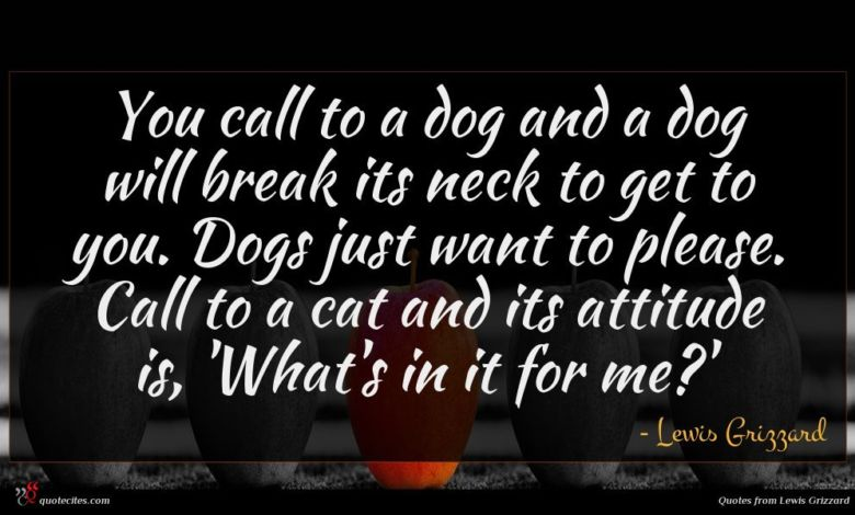 You call to a dog and a dog will break its neck to get to you. Dogs just want to please. Call to a cat and its attitude is, 'What's in it for me?'