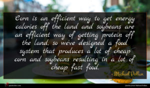 Michael Pollan quote : Corn is an efficient ...