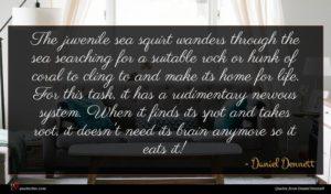 Daniel Dennett quote : The juvenile sea squirt ...